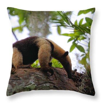 Tamandua Throw Pillow by Bruce J Robinson