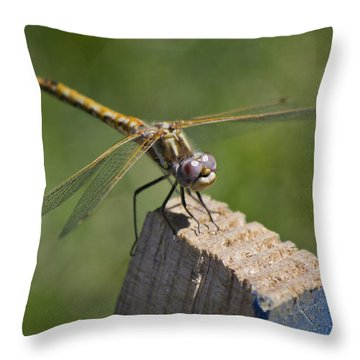 The Perch Throw Pillow by Priya Ghose