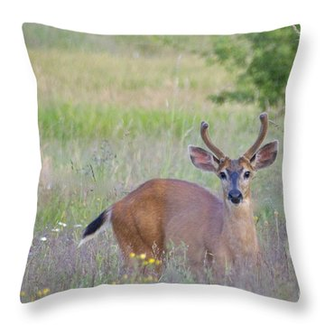 The Yearling Throw Pillow by Sean Griffin