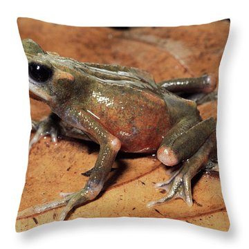 Toad Atelopus Senex On A Leaf Throw Pillow by Michael & Patricia Fogden
