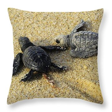 Tommy And Timmy Turtle Throw Pillow by John  Greaves