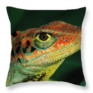 Transverse Anole Anolis Transversalis Throw Pillow by Murray Cooper