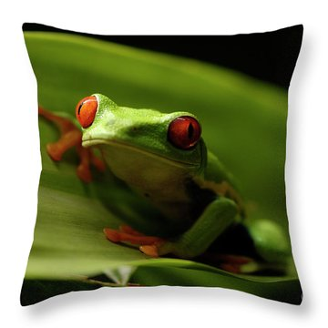 Tree Frog 10 Throw Pillow by Bob Christopher