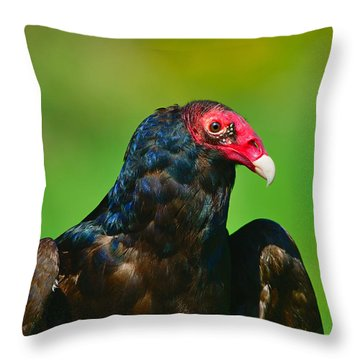 Turkey Vulture Throw Pillow by Tony Beck