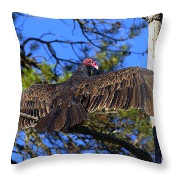 Turkey Vulture With Wings Spread Throw Pillow by Sharon Talson
