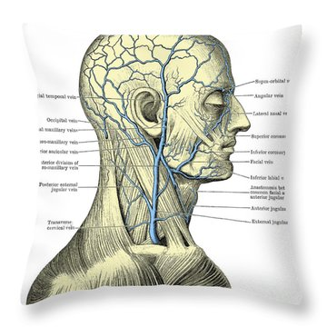 Veins Of The Head And Neck Throw Pillow by Science Source