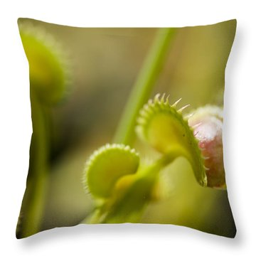 Venus Flytraps As They Consume Insects Throw Pillow by Joel Sartore