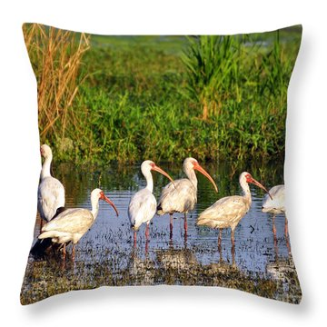 Wading Ibises Throw Pillow by Al Powell Photography USA