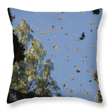 Warmed By The Sun, Thousands Of Monarch Throw Pillow by Annie Griffiths