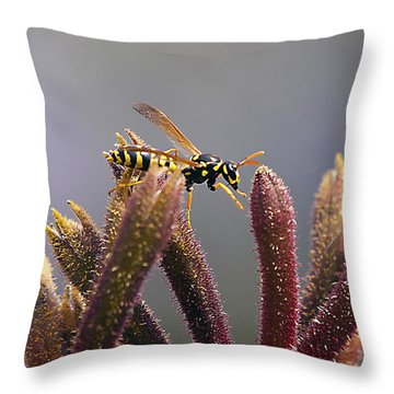 Waspage In The Kangaroo Paw Throw Pillow by Joe Schofield