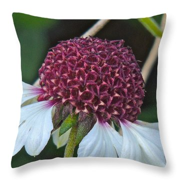 White Coneflower Throw Pillow by Eve Spring