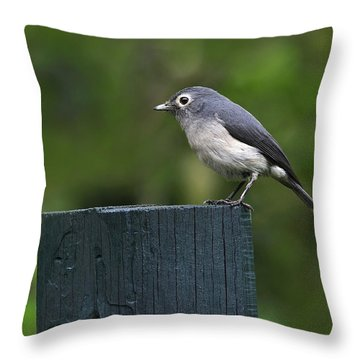White-eyed Slaty Flycatcher Throw Pillow by Tony Beck