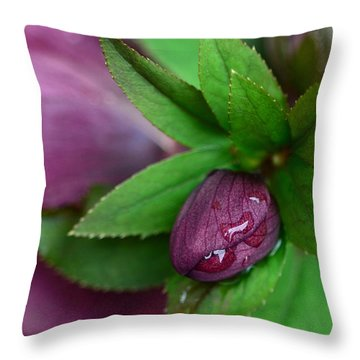 Winter Blooms Throw Pillow by Lisa Phillips