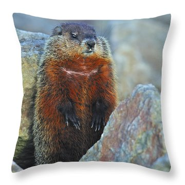 Woodchuck Throw Pillow by Tony Beck