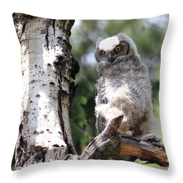 Young Owl Throw Pillow by Shane Bechler