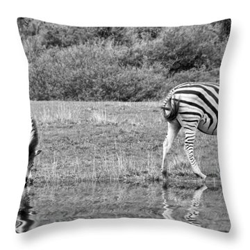 Zebras Throw Pillow by Lynn Bolt