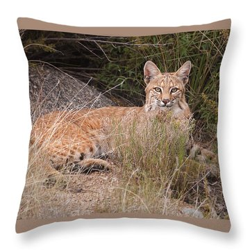 Bobcat At Rest Throw Pillow by Alan Toepfer