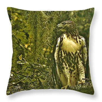 Red-tail Posing Throw Pillow by Phill Doherty