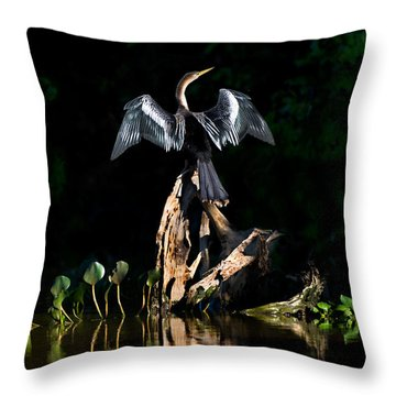 Anhinga Anhinga Anhinga, Pantanal Throw Pillow by Panoramic Images