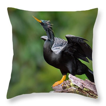 Anhinga Anhinga Anhinga Perching Throw Pillow by Panoramic Images