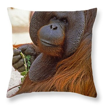 Big Daddy Throw Pillow by Michele Burgess
