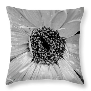 Black And White Gerbera Daisy Throw Pillow by Amy Fose