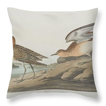 Buff-breasted Sandpiper Throw Pillow by John James Audubon
