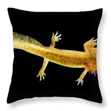 California Giant Salamander Larva Throw Pillow by Dant� Fenolio