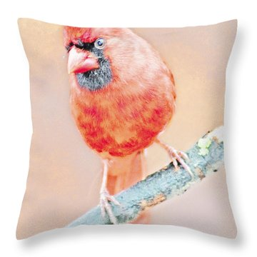 Throw Pillow featuring the photograph Cardinal Male by A Gurmankin