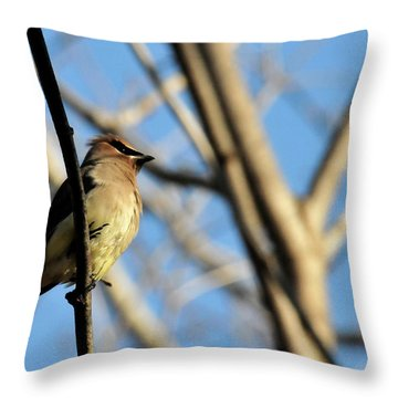 Cedar Wax Wing Throw Pillow by David Arment