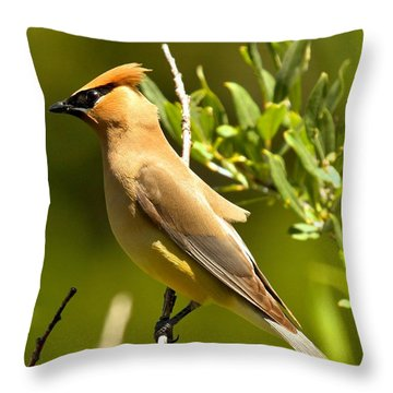 Cedar Waxwing Closeup Throw Pillow by Adam Jewell