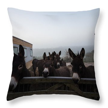 Donkeys Throw Pillow by Dawn OConnor