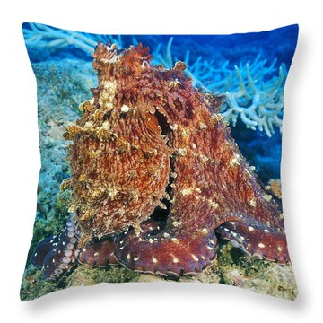 Fiji, Day Octopus Throw Pillow by Dave Fleetham - Printscapes