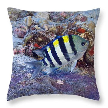 Hawaii, Marine Life Throw Pillow by Dave Fleetham - Printscapes