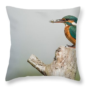 Kingfisher Throw Pillow by Paul Neville