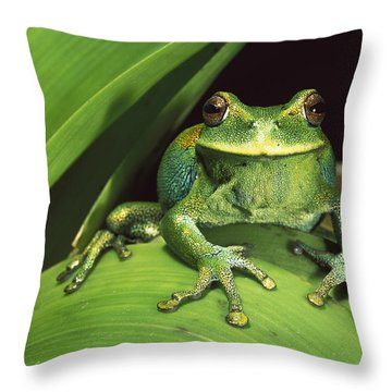 Marsupial Frog Gastrotheca Orophylax Throw Pillow by Pete Oxford
