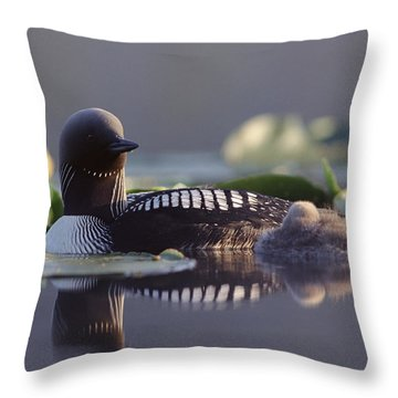 Pacific Loon Gavia Pacifica Parent Throw Pillow by Michael Quinton