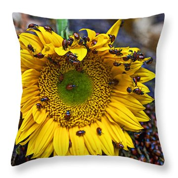 Sunflower Covered In Ladybugs Throw Pillow by Garry Gay
