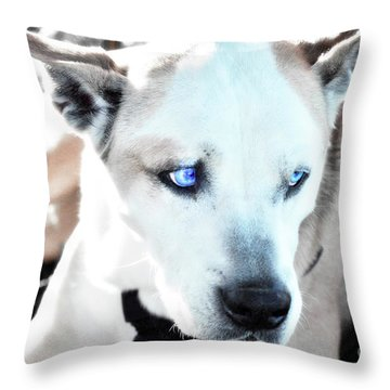 Tas Throw Pillow by Molly McPherson