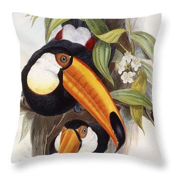 Toucan Throw Pillow by John Gould