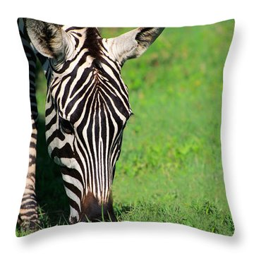Zebra Throw Pillow by Sebastian Musial
