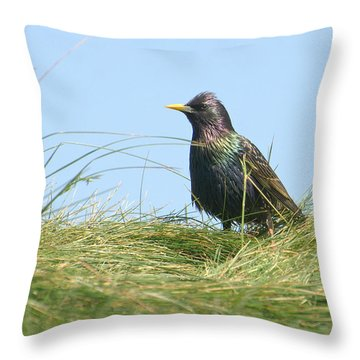 A Place In The Sun Throw Pillow by Fraida Gutovich