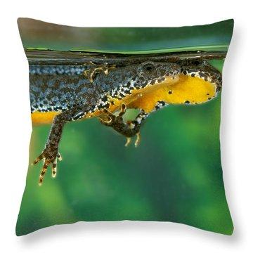 Alpine Newt Triturus Alpestris Throw Pillow by Gerard Lacz