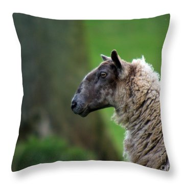 Baa Baa Throw Pillow by Angel  Tarantella
