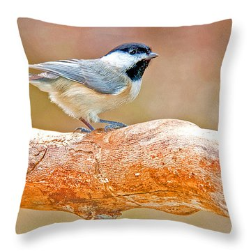 Throw Pillow featuring the photograph Carolina Chickadee On Tree Limb by A Gurmankin