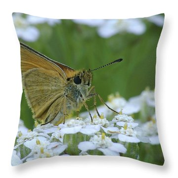 Dion Skipper Yarrow Blossoms Throw Pillow by Michael Peychich