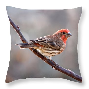 House Finch Throw Pillow by Betty LaRue