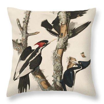 Ivory-billed Woodpecker Throw Pillow by John James Audubon