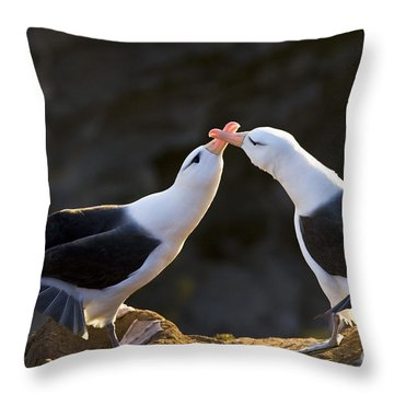 Black-browed Albatross Couple Throw Pillow by Jean-Louis Klein & Marie-Luce Hubert