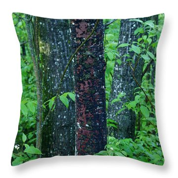 3 Trees Throw Pillow by Joanne Smoley